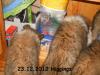 2012-12-23 H-Wurf Higgings - 2