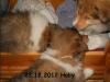 2012-12-23 H-Wurf Holly - 5
