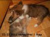 2012-12-23 H-Wurf Honey - 6