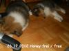 2012-12-23 H-Wurf Honey - 6_1