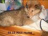 2012-12-23 H-Wurf Huxlee - 3