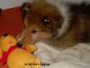 2013-02-12 Higgings - 2