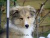 2013-02-12 Holly - 5