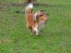 2012-01-08 Hunderunde - 1