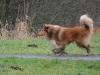 2012-01-08 Hunderunde - 12