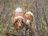 2012-01-08 Hunderunde - 13