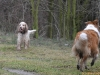 2012-01-08 Hunderunde - 15