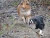 2012-01-08 Hunderunde - 16