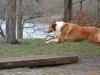 2012-01-08 Hunderunde - 19