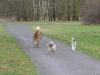2012-01-08 Hunderunde - 2