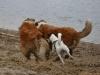 2012-01-08 Hunderunde - 22