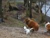2012-01-08 Hunderunde - 24