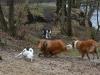2012-01-08 Hunderunde - 25