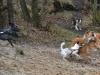 2012-01-08 Hunderunde - 26
