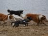 2012-01-08 Hunderunde - 29