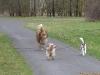 2012-01-08 Hunderunde - 3
