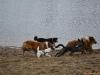 2012-01-08 Hunderunde - 30