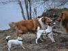 2012-01-08 Hunderunde - 33