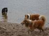 2012-01-08 Hunderunde - 38