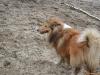 2012-01-08 Hunderunde - 39