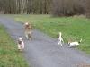 2012-01-08 Hunderunde - 4