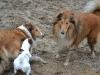 2012-01-08 Hunderunde - 43