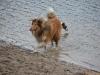 2012-01-08 Hunderunde - 46