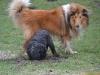 2012-01-08 Hunderunde - 48
