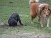 2012-01-08 Hunderunde - 50