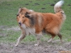 2012-01-08 Hunderunde - 52