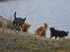 2012-01-08 Hunderunde - 56