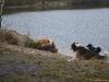 2012-01-08 Hunderunde - 57