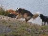 2012-01-08 Hunderunde - 58