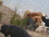 2012-01-08 Hunderunde - 59
