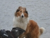 2012-01-08 Hunderunde - 65
