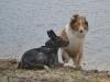2012-01-08 Hunderunde - 66