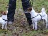 2012-01-08 Hunderunde - 7