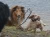 2012-01-08 Hunderunde - 72