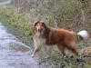 2012-01-08 Hunderunde - 74