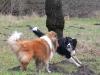 2012-01-08 Hunderunde - 9
