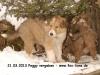 2013-03-21-peggy-3_6