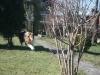 2013-03-05 Grundschule im Kleegarten - 7