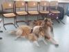 2013-03-12 Grundschule im Kleegarten - 30