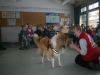2013-03-14 Grundschule im Kleegarten - 38