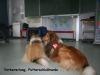 2013-03-14 Grundschule im Kleegarten - 49