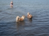 2013-07-19-bodensee-10