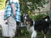 2013-07-20-lionheart-collies-13