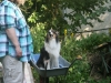 2013-07-20-lionheart-collies-14