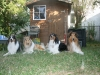 2013-07-20-lionheart-collies-16