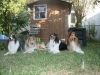 2013-07-20-lionheart-collies-17